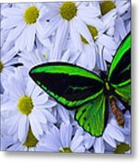 Green Wings In The Mums Metal Print
