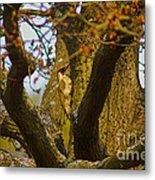 Green Woodpecker Richmond Park Metal Print