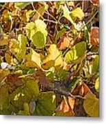 Green Yellow And Dry Leaves Metal Print