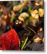 Greenbriar Leaf And Wintergreen Seedpod Metal Print