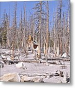 Lonely Cabin Metal Print