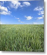 Greens And Sky Metal Print
