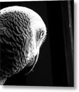 Grey 1 Metal Print by Paulina Szajek