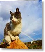 Grey Cat And Rainbow Metal Print