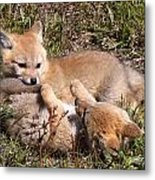 Grey Fox Kitts At Play Metal Print