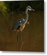 Grey Heron In Brown Water Metal Print