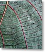 Grey Leaf With Purple Veins 2 Metal Print