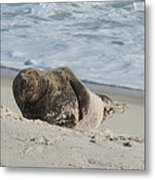 Grey Seal Pup On Beach Metal Print