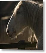 Grey Shire Horse Metal Print