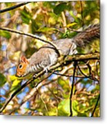 Grey Squirrel - Impressions Metal Print