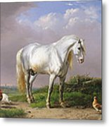 Grey Stallion Metal Print
