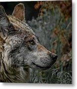 Grey Wolf Profile 3 Metal Print