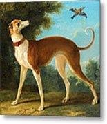 Greyhound In A Landscape Metal Print