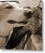 Greyhound Rescue 3 Metal Print by Jackie Bodnar