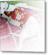 Greyhound Rescue 5 Metal Print by Jackie Bodnar