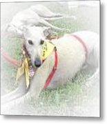 Greyhound Rescue 7 Metal Print by Jackie Bodnar