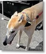 Greyhound Rrrescue 6 Metal Print