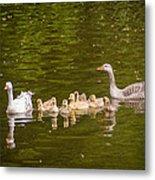 Greylag Goose Family Metal Print