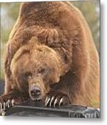 Grizly Lunch Metal Print