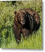 Grizzly 760 In The Morning Metal Print