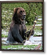 Grizzly Bear 08 Metal Print
