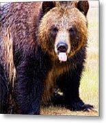Grizzly Bear 1 Metal Print