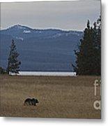Grizzly Bear  #5270 Metal Print