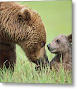 Grizzly Bear And Cub in Katmai Metal Print