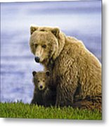 Grizzly Bear And Cub Metal Print
