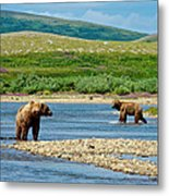 Grizzly Bear Communication In The Moraine River In Katmai  Np-ak Metal Print