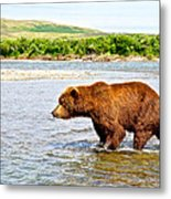 Grizzly Bear Determined To Catch A Salmon This Time In The Moraine River  Metal Print