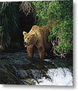 Grizzly Bear Fishing Brooks River Falls Metal Print
