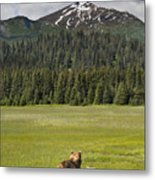 Grizzly Bear Mother And Cubs In Meadow Metal Print