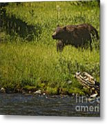 Grizzly Bear-signed-#1158 Metal Print
