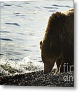 Grizzly Bear-signed-#4137 Metal Print
