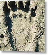 Grizzly Bear Track In Soft Mud. Metal Print