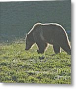Grizzly Bear With Aura Metal Print