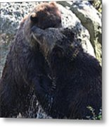 Grizzly Bears Fighting Metal Print