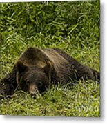 Grizzly Cub  #0863 Metal Print