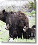 Grizzly Family Portrait Metal Print