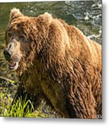 Grizzly On The River Bank Metal Print