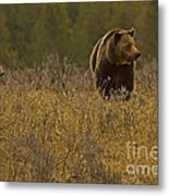 Grizzly Sow And Cub   #6365 Metal Print