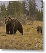 Grizzly Sow And Cub  #6382 Metal Print