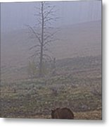Grizzly Sow And Twins  #5817 Metal Print