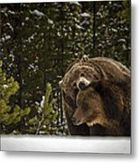 Grizzly's Courting Metal Print