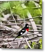 Grosbeaks Metal Print