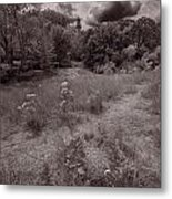 Gross Point Beach Grasses Bw Metal Print