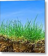 Ground And Grass Metal Print