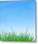 Ground Grass And Sky Metal Print
