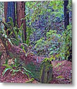 Ground Level Landscape In Armstrong Redwoods State Preserve Near Guerneville-ca Metal Print